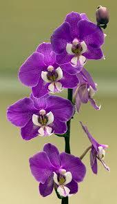 Hilo Flowers - 197 best květiny images on pinterest flowers plants and pretty