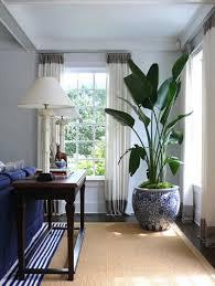Plants Home Decor Best 10 Indoor Plant Decor Ideas On Pinterest Plant Decor
