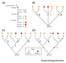 phylogenetic paleoecology tree thinking and ecology in deep time
