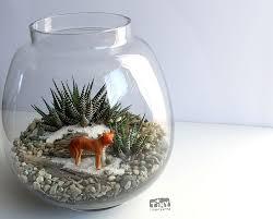 haworthia succulent terrarium with dingo miniature tiny little karma