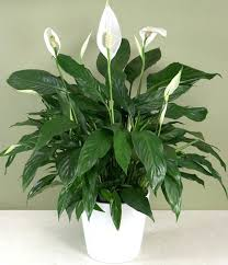 common household plants indestructible houseplants house plants