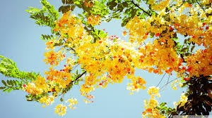 beautiful flowers hd desktop wallpaper high definition mobile
