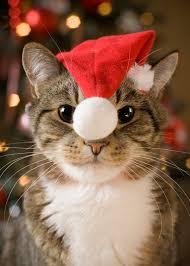 cat u0026 kitten theme christmas cards u2013 pet christmas cards