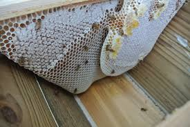 Harvesting Honey From A Top Bar Hive Last Harvest From My Top Bar Hive From My Backyard