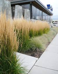 best 25 feather reed grass ideas on ornamental