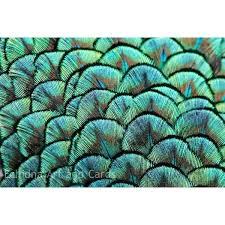 peacock feather home decor wall design blue green print ideas