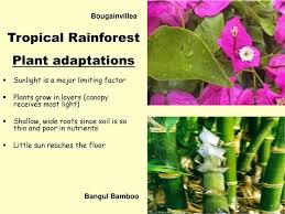 5 Dominant Plants In The Tropical Rainforest Dominant Plants In Tropical Rainforest Hundreds Of Years Later