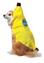 Dog Minion Halloween Costumes Chiquita Banana Dog Costume