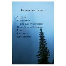 symbolism trees evergreen nature s path