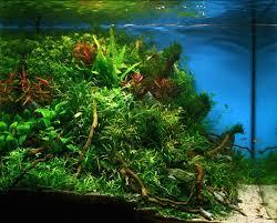 Driftwood Aquascape Jan Simon Knispel And Aquascaping Aqua Rebell