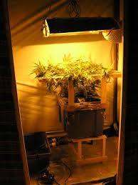 chambre culture cannabis complete chambre de culture complete cannabis interieur newsindo co
