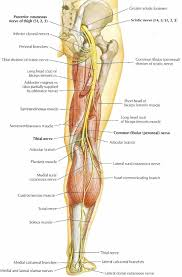 Nervous System Human Anatomy Nervous System Structure Of The Nervous System