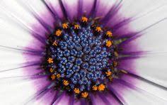 flower munrecipe pinterest flower