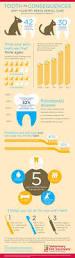 best dental insurance nc best 25 free dental insurance ideas on pinterest teeth dental
