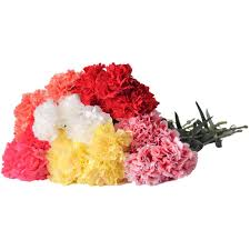 Wholesale Carnations Carnations Wholesale Within 48 Hours U2013 48fresh