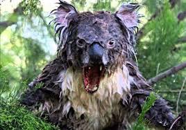 imagenes animales australia todos los bichos de australia que quieren matarte capítulo ii