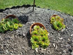 easy rock garden ideas landscaping gardening unique flower bed for