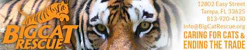 Blind Cat Sanctuary Big Cat Rescue Is Caring For Big Cats And Ending The Trade