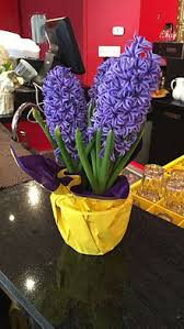 hyacinth flower hyacinth plant