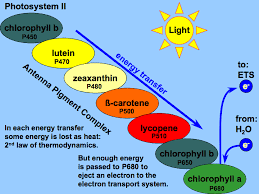 Is Light Energy Light Reactions