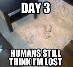 Lost Keys Meme - day 3 humans still think i m lost they still do not realize