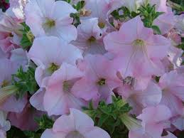garden flowers names and photos excellent what is the name of