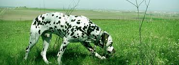 Seeking 1 Sezon 2 Bã Lã M Divalinor Count Of Gold News Specialized Dalmatian Show