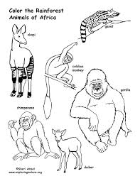 Rainforest African Animals Coloring Page Forest Animals Coloring Pages