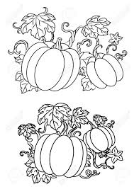 black and white line drawings of pumpkins growing on trailing