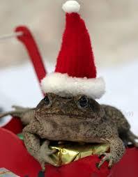 Féérie de Noël Images?q=tbn:ANd9GcS-bFJcliG2kVb8drpTIMvFIm1thylJxVDaGpe1rkX_YTV6cNQGZW8_mUrL