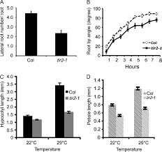 the transport inhibitor response2 gene is required for auxin
