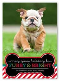 holiday pet photography tips guest post christmas card photos