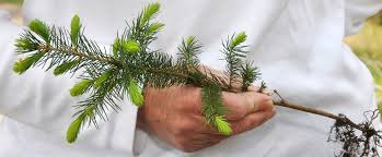 tree seedlings and shrubs can be ordered from dnr reforestation
