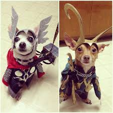 Kesha Halloween Costume Ideas 50 Purrfect Halloween Costume Ideas For Your Pet Thor Dog And