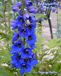 Dark Blue Meaning by Delphinium Flowers Meanings The Symbolic Meaning Of The Delphinium