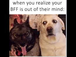 Your Crazy Meme - bff crazy dog meme album on imgur