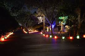 gladys porter zoo nights and lights brownsville herald home