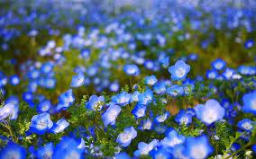 Blue Flower Backgrounds - blue cute wallpaper wallpapersafari