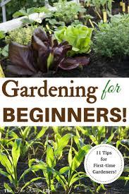 tips on starting your own vegetable garden best gardening