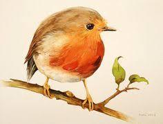 drawn robin cute pencil and in color drawn robin cute
