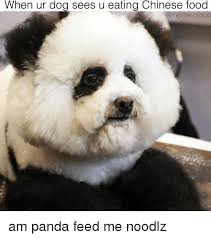 Dog Food Meme - when ur dog sees u eating chinese food dog meme cloud am panda feed