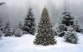outdoor christmas tree outdoor christmas tree wallpaper 14 e spa org