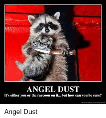 Meme Generator Raccoon - 25 best memes about motivational generator motivational
