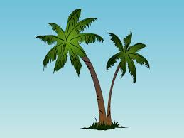 adaptations of a palm tree thinglink