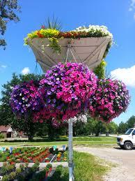 garden plants sterling heights mi annuals perennials flower