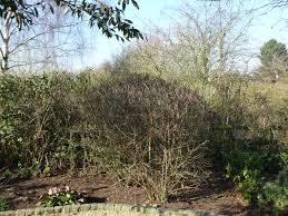 protecting your garden in winter jhps jhps