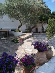 olive picking holidays in syros greece the good life greece