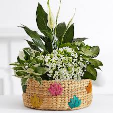 potted flowers potted flowers flower plants plants delivery