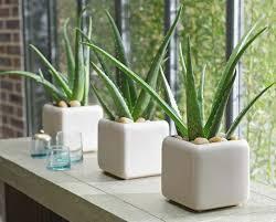 plante verte dans une chambre à coucher 5 plantes d intérieur pour décorer la chambre à coucher et nous