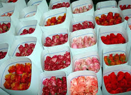 wholesale roses top floral exports in australia australian cut flower industry